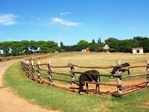 Esel auf Brijuni