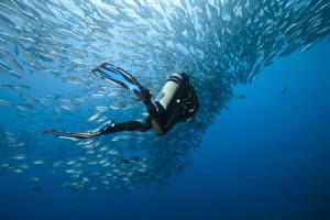 Tauchen mit Fischen bei Brijuni
