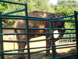 Elefant auf Brijuni