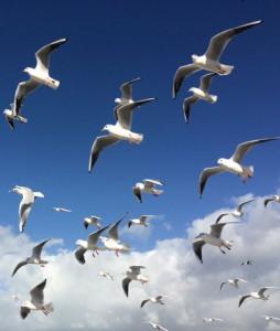 Paradies für Vögel und Möwen - Brijuni